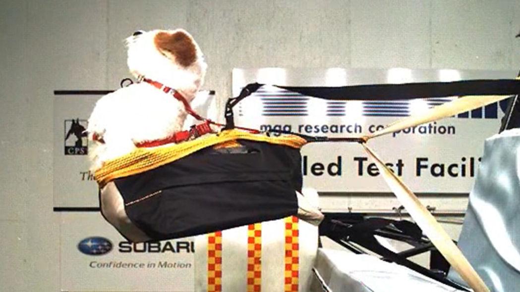 宠物猫狗坐车,应该用宠物箱还是用安全带?